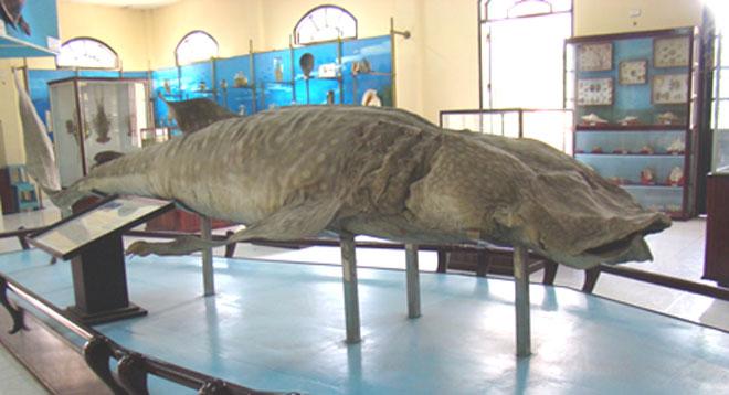 Viện Hải dương học Nha Trang – Kho tàng sinh vật biển lớn nhất Việt Nam - 4