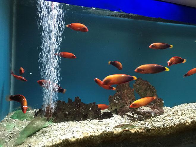 Viện Hải dương học Nha Trang – Kho tàng sinh vật biển lớn nhất Việt Nam - 7