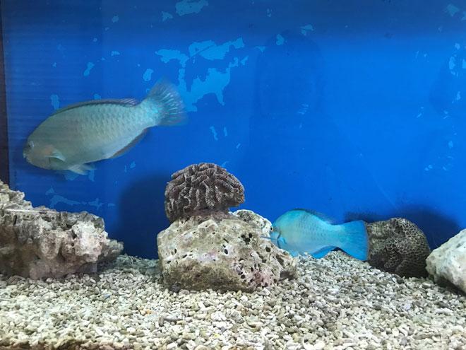 Viện Hải dương học Nha Trang – Kho tàng sinh vật biển lớn nhất Việt Nam - 8