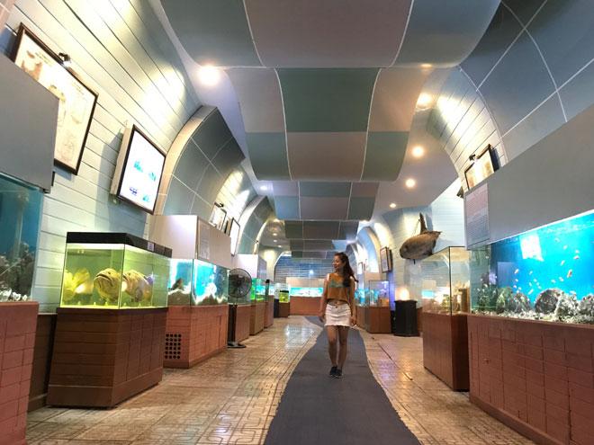 Viện Hải dương học Nha Trang – Kho tàng sinh vật biển lớn nhất Việt Nam - 10