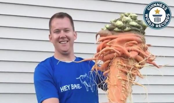 """Nông dân Mỹ trồng được cà rốt to nhất thế giới nhờ """"chút may mắn"""" - ảnh 1"""