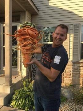 """Nông dân Mỹ trồng được cà rốt to nhất thế giới nhờ """"chút may mắn"""" - ảnh 2"""