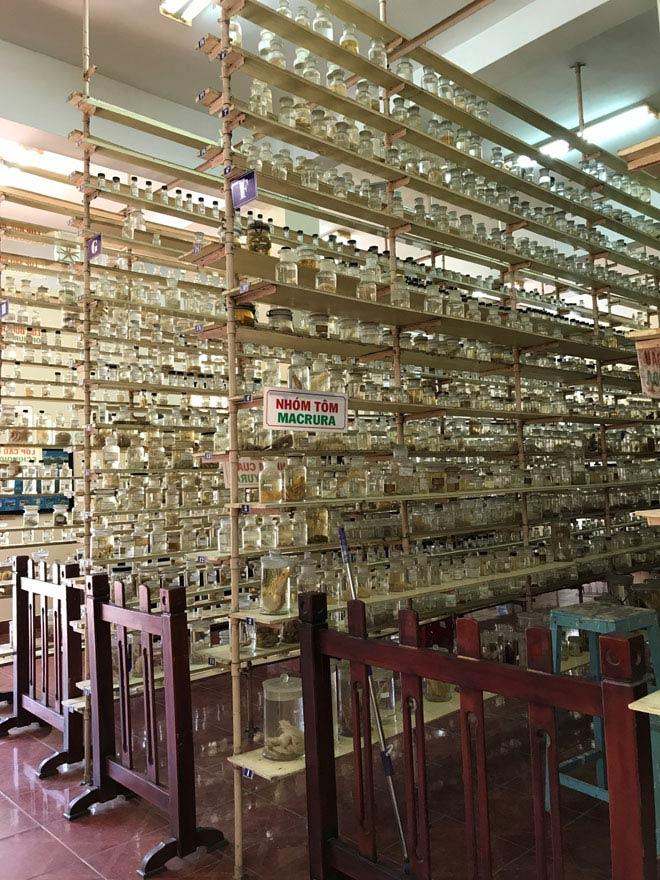 Viện Hải dương học Nha Trang – Kho tàng sinh vật biển lớn nhất Việt Nam - 3