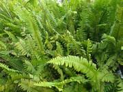 Tin tức sức khỏe - Dù đi tiểu 7-8 lần 1 đêm cũng hết chỉ sau 1 tháng nhờ loại cây dễ tìm này