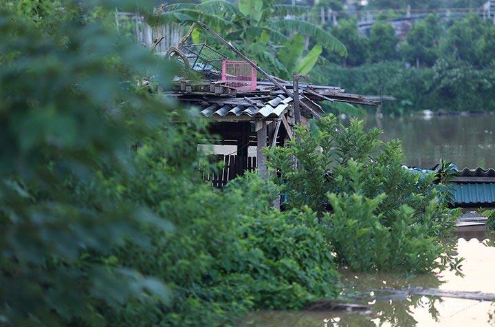 """Người trồng quất """"méo mặt"""" vì nước sông Hồng dâng cao - 1"""