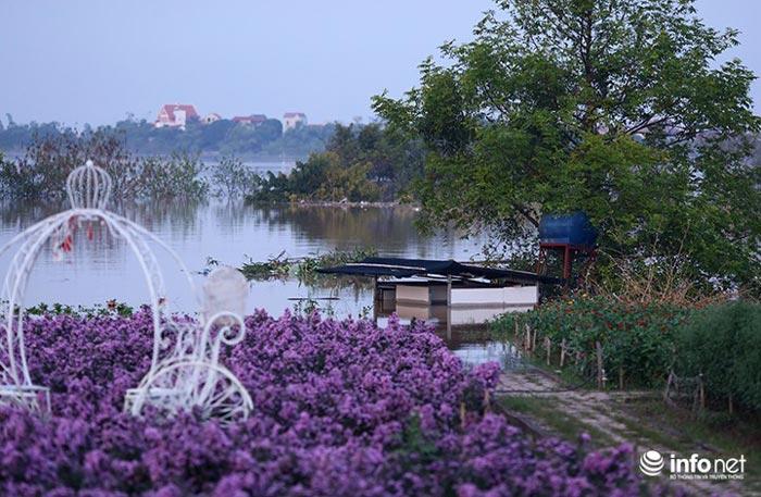 """Người trồng quất """"méo mặt"""" vì nước sông Hồng dâng cao - 8"""