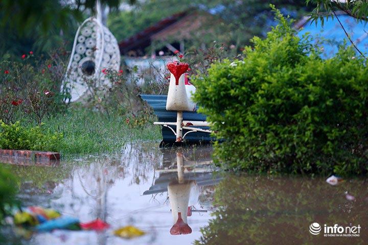"""Người trồng quất """"méo mặt"""" vì nước sông Hồng dâng cao - 9"""