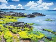 Cảnh đẹp, món ngon ở Bàn Than, biển Rạng