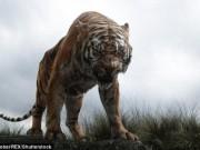 """Truy lùng hổ cái giết 4 người vì thích  """" mùi vị thịt người  ở Ấn Độ"""