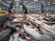 Thị trường - Tiêu dùng - Những hình ảnh đẹp về cá tra từ ao nuôi đến nhà máy