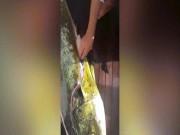 Mổ bụng cá vàng óng, kinh ngạc với bữa ăn cuối bên trong