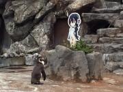 Chim cánh cụt phải lòng bìa các tông qua đời ở tuổi 20