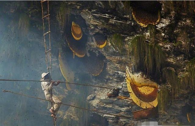 """Treo mình giữa vực sâu để tìm loại mật ong """"đắt hơn vàng"""", 127 triệu đồng/kg - 2"""