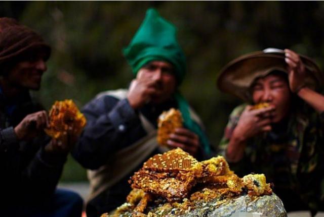 """Treo mình giữa vực sâu để tìm loại mật ong """"đắt hơn vàng"""", 127 triệu đồng/kg - 4"""