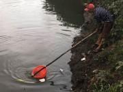 """Người lớn, trẻ nhỏ đua nhau vợt cá trên kênh  """" chết """"  ở Sài Gòn"""