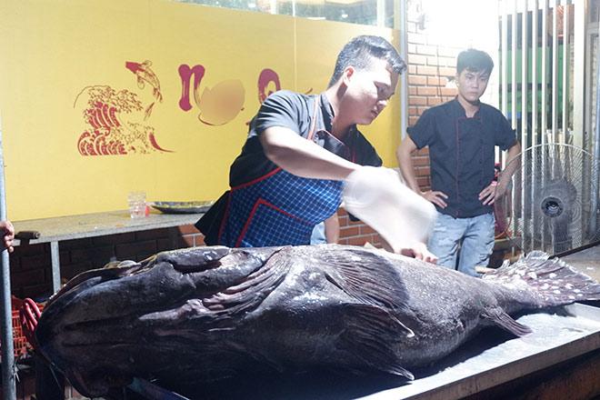"""""""Thủy quái"""" nặng hơn 1 tạ được đưa từ vịnh Thái Lan về Hà Nội - 5"""