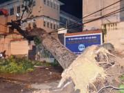 Cây cổ thụ đè sập tường trường Đại học Sài Gòn