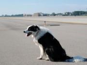 Liên tiếp chó xâm nhập đường cất hạ cánh các cảng hàng không