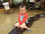Nóng 24h qua: Thông tin bất ngờ vụ bé trai 3 tuổi cưỡi trăn khổng lồ trong mưa lụt