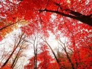 """"""" Rụng tim """"  trước cảnh đẹp tựa xứ thần tiên khi trời vào thu ở Trung Quốc"""