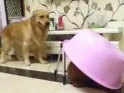 """Đến chó còn biết  """" úp sọt """"  gái"""