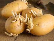 Chớ dại ăn những thực phẩm này khi đã mọc mầm