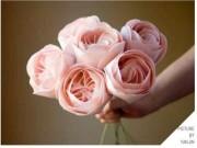"""Những bông hoa đắt nhất TG - món quà  """" trong mơ """"  của chị em ngày 20-10"""