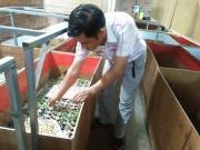 Làm giàu ở nông thôn: Bỏ lương 20 triệu về nuôi dế, chưa sợ ế