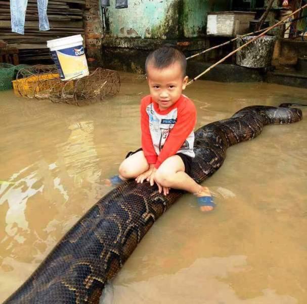 """Nóng trong tuần: Bé trai 3 tuổi cưỡi trăn """"khủng"""" ở Thanh hóa gây sốc"""