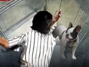 Chó cưng sao Hàn vào thang máy cắn chết người