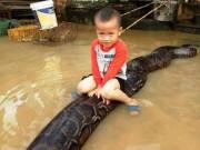 Nóng trong tuần: Bé trai 3 tuổi cưỡi trăn  khủng  ở Thanh hóa gây sốc