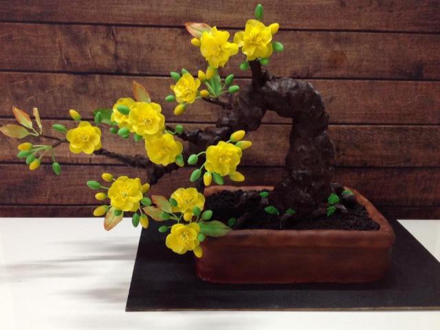 """Bạn sẽ """"sốc"""" khi biết cây mai bonsai này thực sự là gì"""