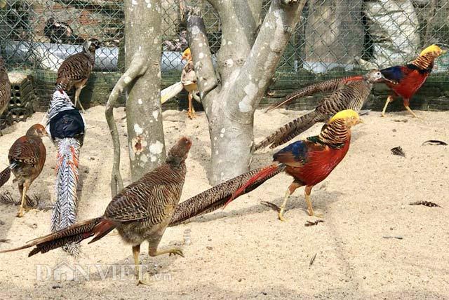 """Ngắm trang trại chim, gà """"quý tộc"""" trị giá tiền tỷ - 2"""