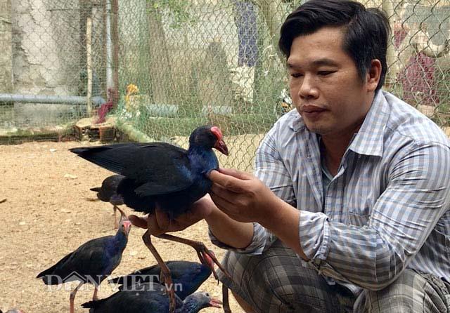 """Ngắm trang trại chim, gà """"quý tộc"""" trị giá tiền tỷ - 6"""