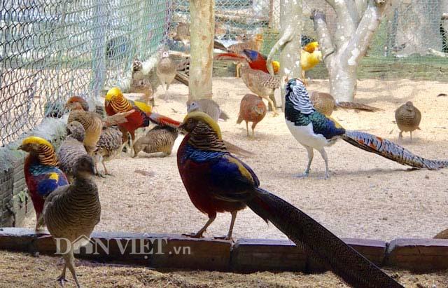 """Ngắm trang trại chim, gà """"quý tộc"""" trị giá tiền tỷ - 7"""