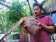 Làm trang trại giáo dục ở Hà Nội: Gà lợn ăn xả láng lại có bộn tiền
