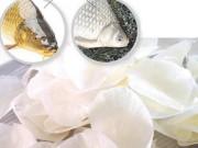 Bạn có tin vảy cá chứa nhiều chất dinh dưỡng quý?