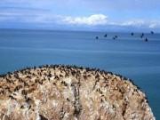 Tài chính - Bất động sản - Chuyện lạ: Cường quốc làm giàu nhờ... phân chim