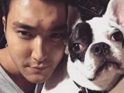 Ca nhạc - MTV - Hết vụ chó cưng cắn chết người, sao Hàn lại bị chỉ trích vì vạ miệng