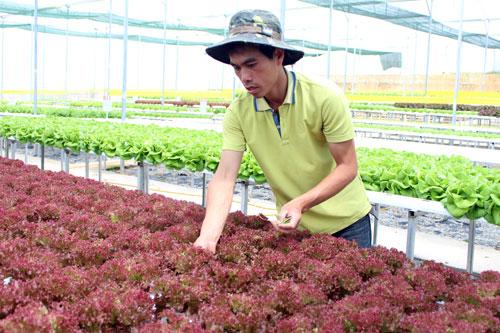 """Thạc sĩ bỏ việc về """"nghịch đất"""" trồng rau, thu nhập """"không phải dạng vừa đâu"""" - 1"""