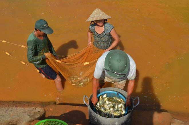Làm giàu ở nông thôn: Trên hươu, dưới cá, khấm khá mấy hồi - 1