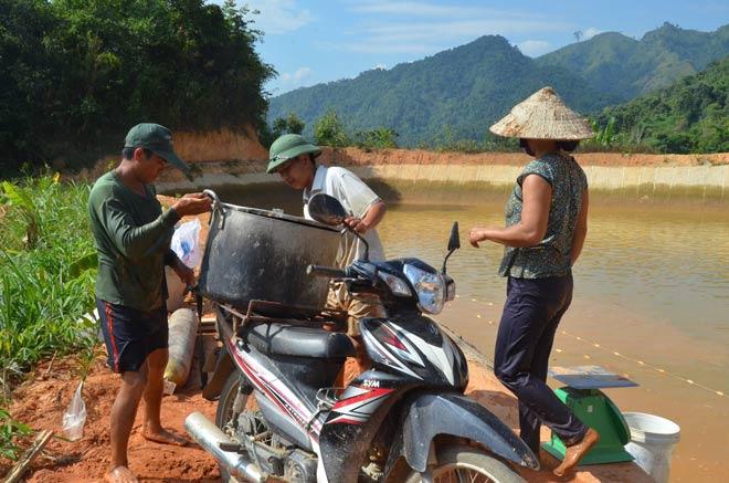 Làm giàu ở nông thôn: Trên hươu, dưới cá, khấm khá mấy hồi - 2