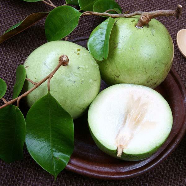 Tác dụng tuyệt vời từ quả tới thân và lá của cây vú sữa - 2