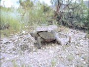 Phi thường - kỳ quặc - Video cực lạ: Rắn độc đè đầu cưỡi cổ rùa