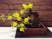 """Ẩm thực - Cách làm lòng heo """"bá đạo"""" và cây mai bonsai nóng nhất cộng đồng mạng tuần qua"""