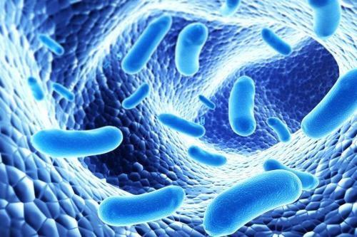 Rối loạn tiêu hóa nên dùng men vi sinh hay men tiêu hóa? - 1
