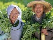 Sức khỏe đời sống - 8 món ăn trường thọ