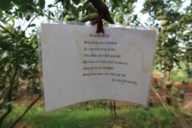"""Trồng bưởi ngọt như đường, """"đuổi trộm"""" bằng thơ, bán quả bằng nụ cười - 3"""