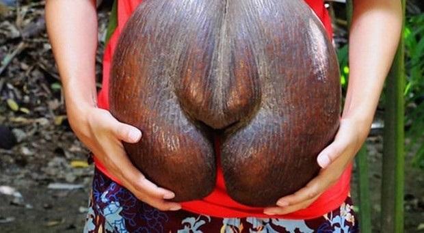 """""""Nhân sâm"""" trong giới trái cây: hình thù """"tế nhị"""", giá chỉ 170 nghìn đồng/quả - 2"""