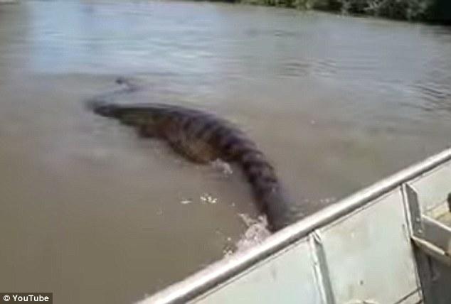 Choáng váng với trăn khổng lồ kinh dị trên sông Brazil - 1